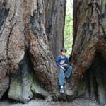 Big Bassin Redwood State Park